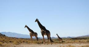 'Appalling' Comments After Giraffe Deaths